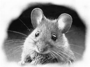 Citations du jour de la petite souris | Maître Renard