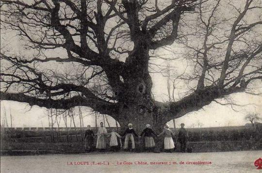 chc3aane-de-la-loupe-carte-postale-ancienne-1[1]