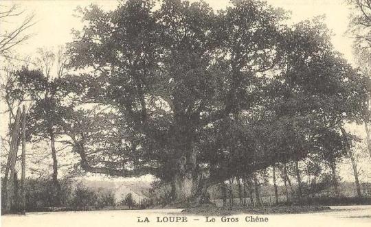 chc3aane-de-la-loupe-carte-postale-ancienne-2[1]
