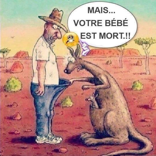 Petite bête Kangourou-bc3a9bc3a9-mort