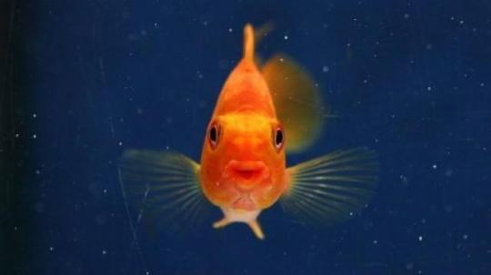 les-hommes-moins-concentres-que...les-poissons-rouges