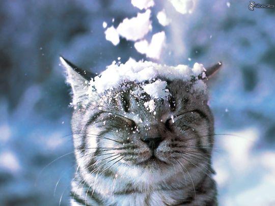 visage-de-chat,-neige-166218[1]