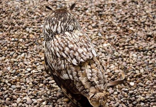 20-camouflages-spectaculaires-danimaux-qui-ne-manquent-pas-de-talent12