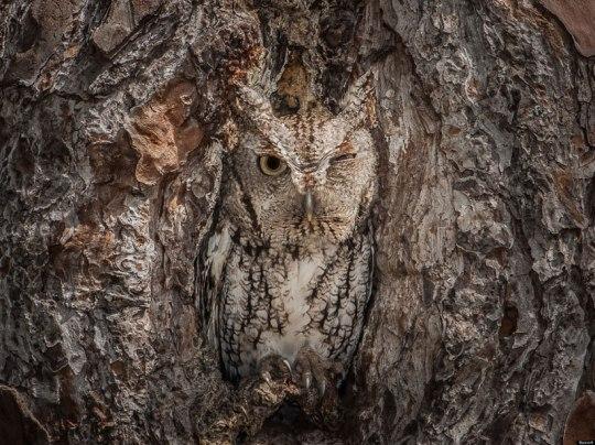 23-camouflages-spectaculaires-danimaux-qui-ne-manquent-pas-de-talent1
