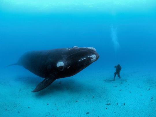 rencontre-baleine