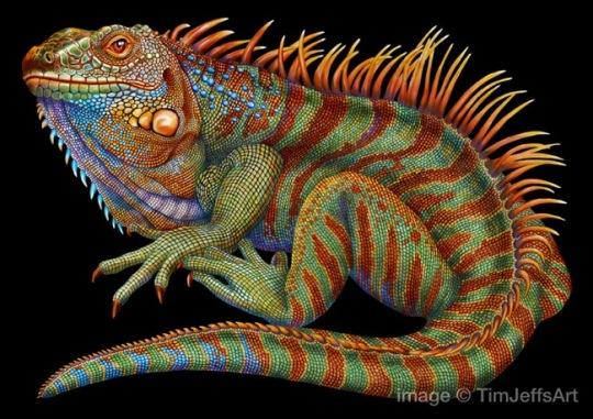 tim-jeffs-dessin-crayons-couleur-cameleon-animaux-9