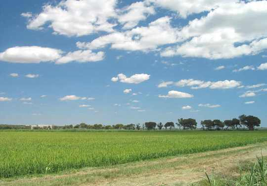 France_rice_field_in_camargue