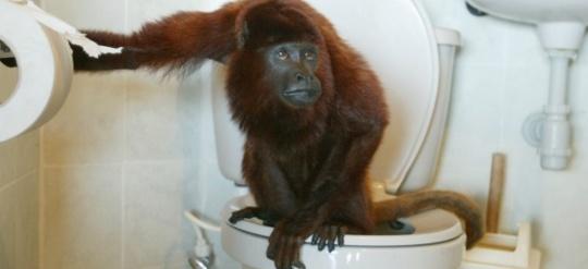 singe_toilettes