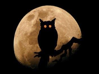 103_une chouette lune
