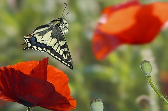 283147-l-envol-du-papillon
