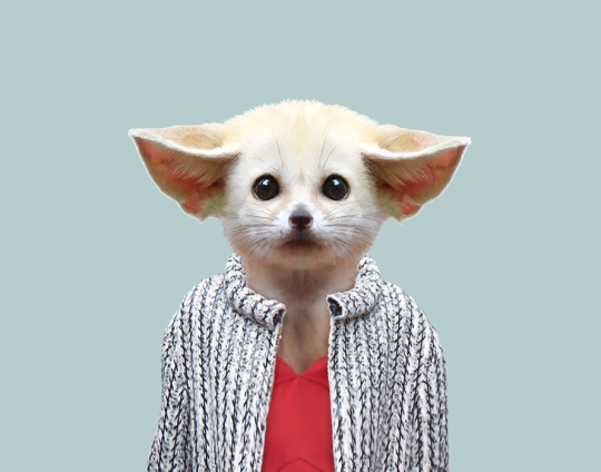 Fennec-Fox-Vulpes-Zerda-copia