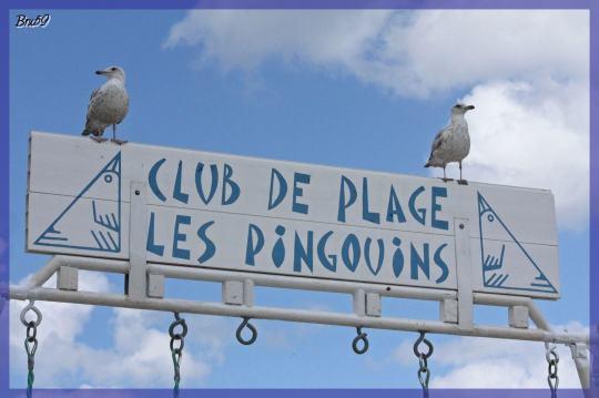 achblog.com-Oiseaux---Mouettes-et-Goelands-240335