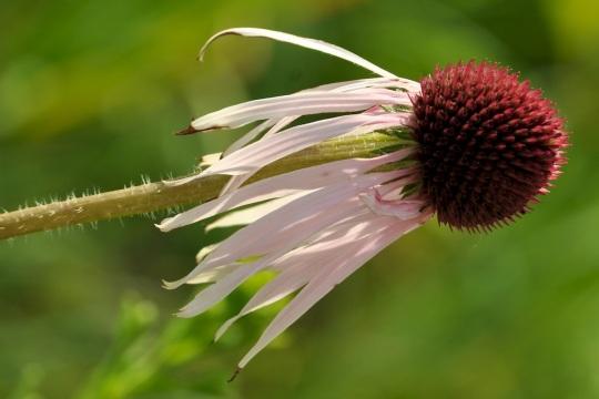 The Flower's Shuttlecock