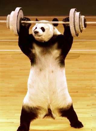 Panda_sport_Humour