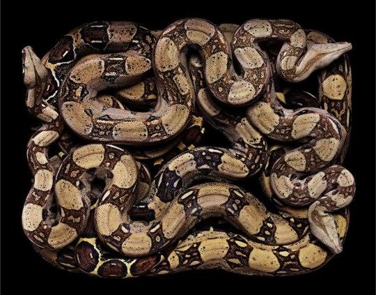 serpent-6