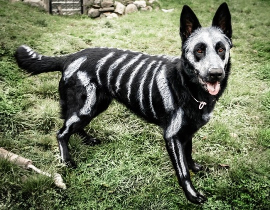 costume-animal-halloween-03