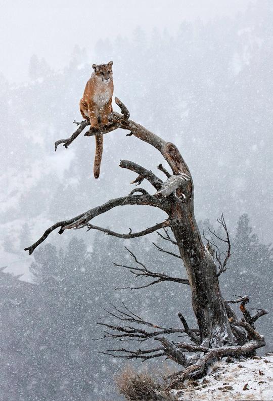 un-animal-trop-mignon-dans-la-neige