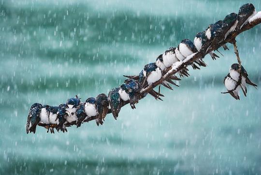une-colonie-doiseaux-dans-la-neige