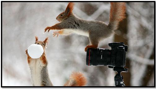 ecureuil-neige-hiver-montagne-animaux-humour