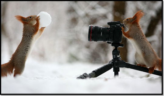 photo-ecureuil-neige