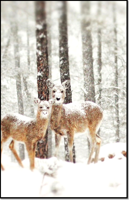 animaux-neige-hiver-biche.png
