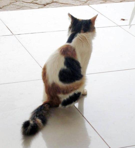 chat-coeur.jpg