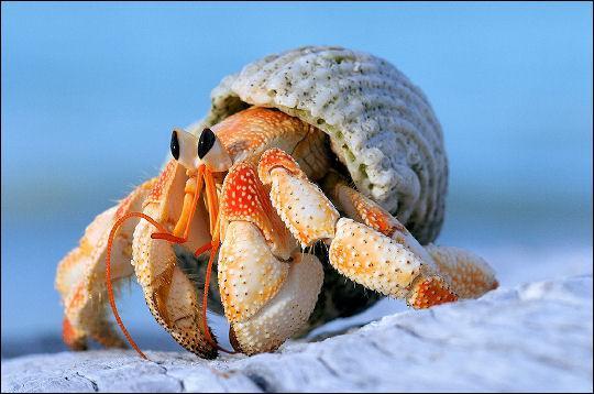 crustacé.jpg