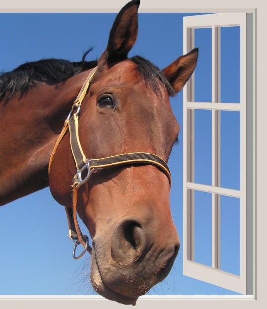 portrait-cheval-fenêtre-ouverte-images-photos-gratuites-1560x1804.jpg