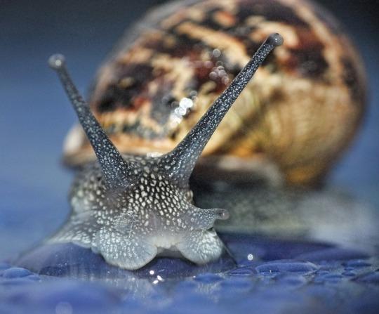 snail-1562391_960_720.jpg