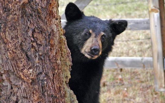 bear-50032_960_720.jpg
