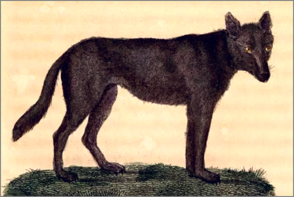 loup-normand (2)