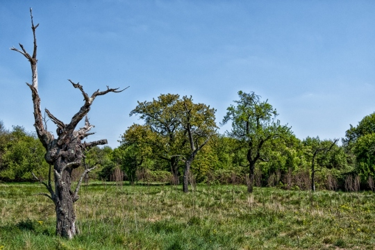 The Ex-Tree