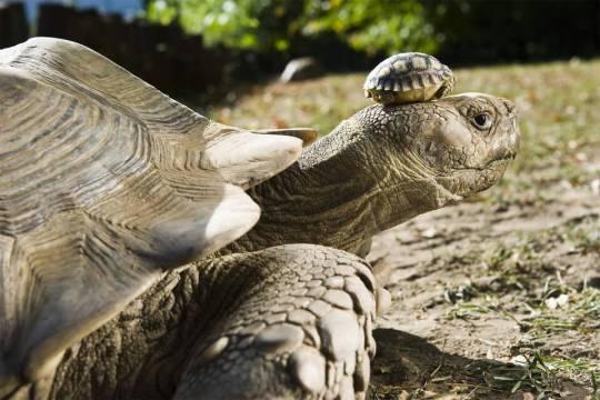 tortue-140ans-fils.jpg